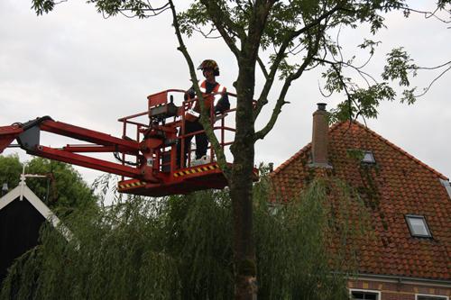 Trees Korver snoeien v
