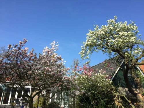 Wintersnoei, lentekriebels en zomerzon